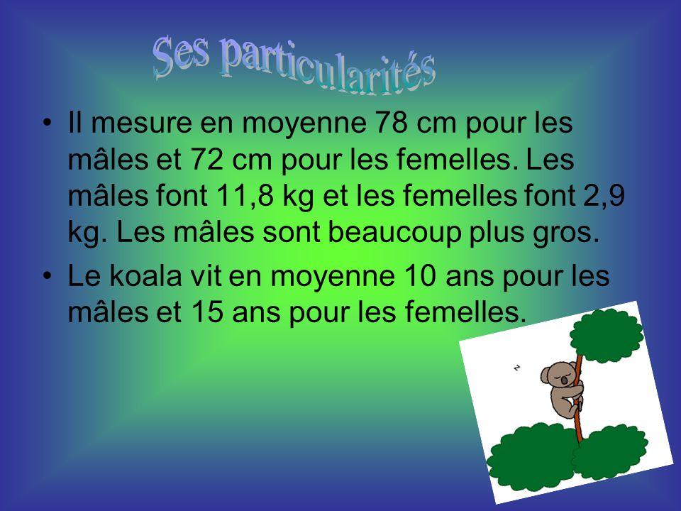 Il mesure en moyenne 78 cm pour les mâles et 72 cm pour les femelles. Les mâles font 11,8 kg et les femelles font 2,9 kg. Les mâles sont beaucoup plus