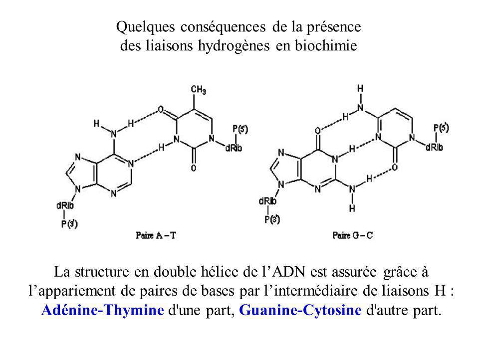 Quelques conséquences de la présence des liaisons hydrogènes en biochimie La structure en double hélice de l'ADN est assurée grâce à l'appariement de