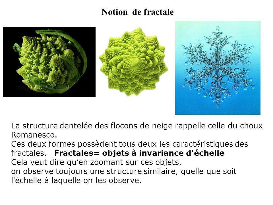 Notion de fractale La structure dentelée des flocons de neige rappelle celle du choux Romanesco. Ces deux formes possèdent tous deux les caractéristiq