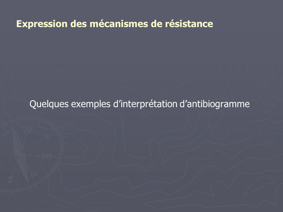 Quelques exemples d'interprétation d'antibiogramme Expression des mécanismes de résistance