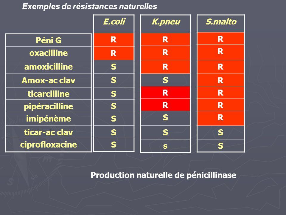 Péni G oxacilline amoxicilline Amox-ac clav ticarcilline pipéracilline imipénème ticar-ac clav ciprofloxacine E.coli R R S S S S S S S K.pneu R R R S