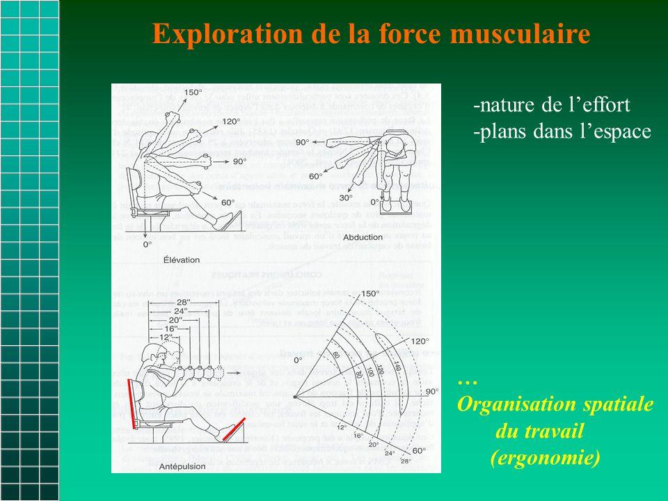 Exploration de la force musculaire -nature de l'effort -plans dans l'espace … Organisation spatiale du travail (ergonomie)