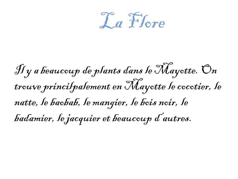 La Flore Il y a beaucoup de plants dans le Mayotte.