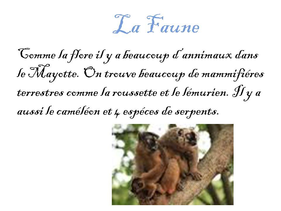 La Faune Comme la flore il y a beaucoup d'annimaux dans le Mayotte.