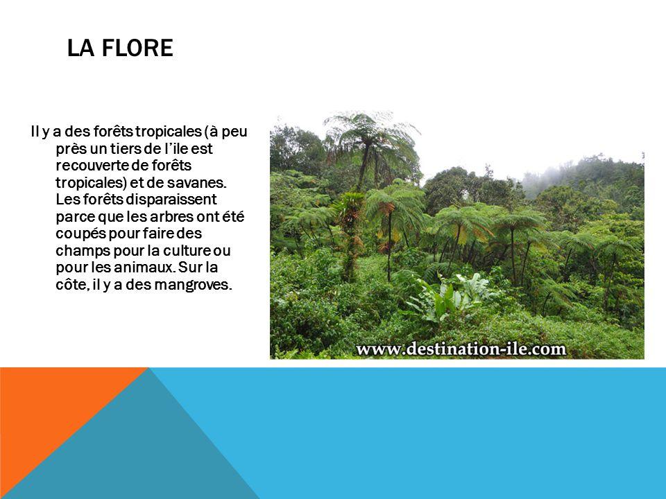 Il y a des forêts tropicales (à peu près un tiers de l'ile est recouverte de forêts tropicales) et de savanes. Les forêts disparaissent parce que les