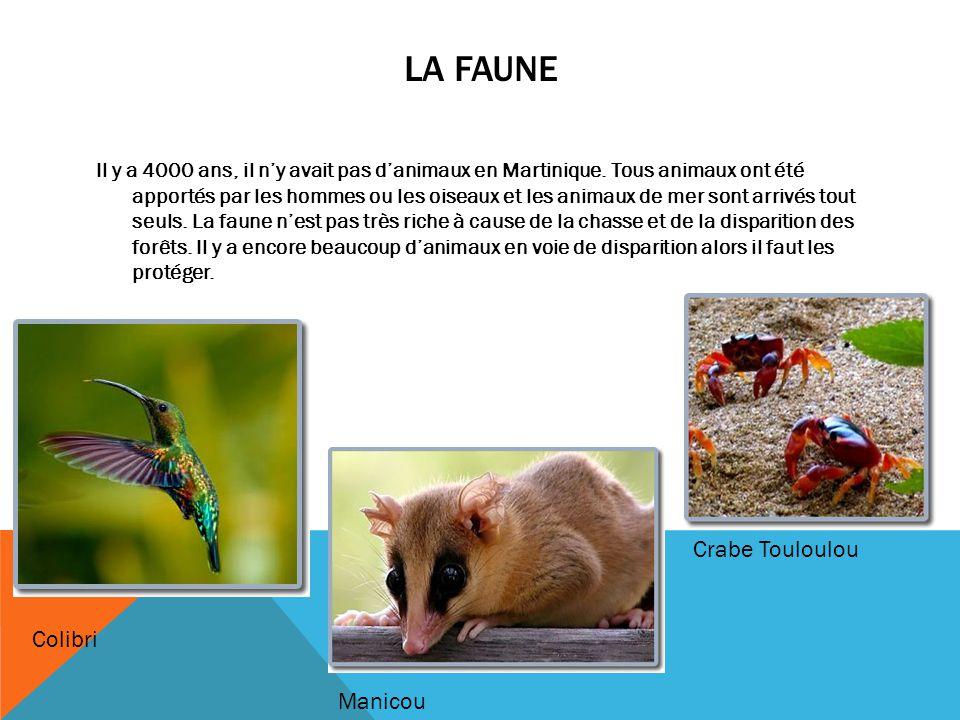 LA FAUNE Il y a 4000 ans, il n'y avait pas d'animaux en Martinique. Tous animaux ont été apportés par les hommes ou les oiseaux et les animaux de mer