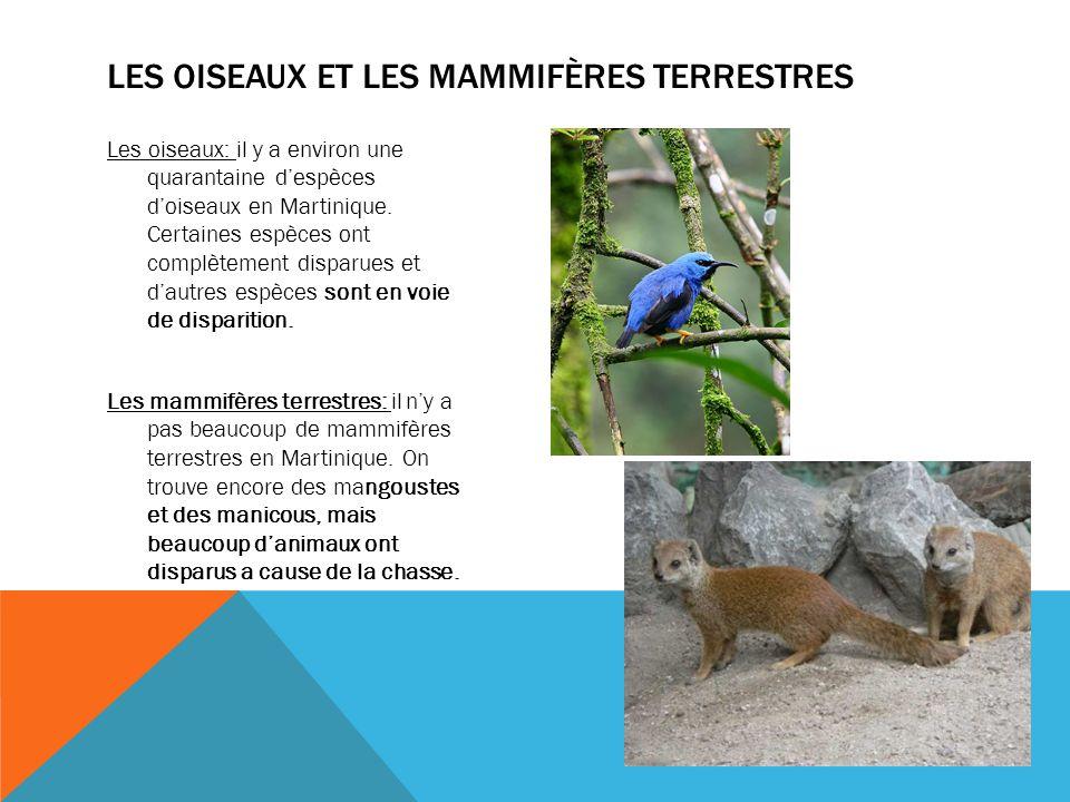 Les oiseaux: il y a environ une quarantaine d'espèces d'oiseaux en Martinique. Certaines espèces ont complètement disparues et d'autres espèces sont e