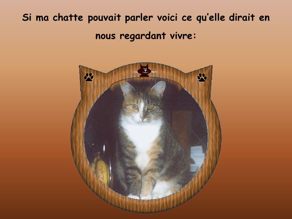 Si ma chatte pouvait parler voici ce qu'elle dirait en nous regardant vivre: