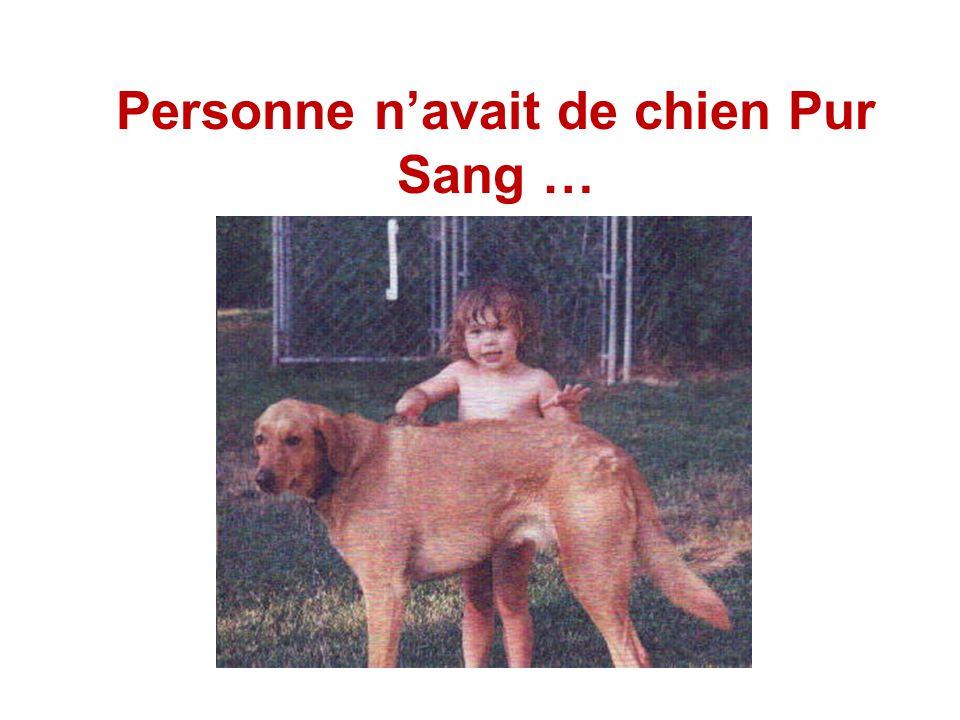 Personne n'avait de chien Pur Sang …