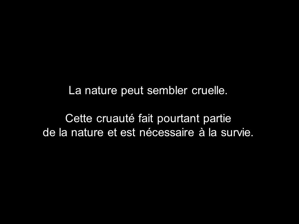 La nature peut sembler cruelle.