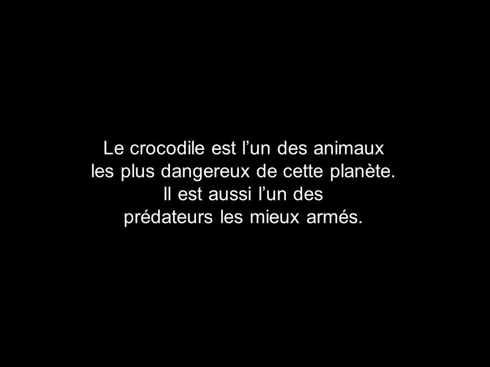 Le crocodile est l'un des animaux les plus dangereux de cette planète.