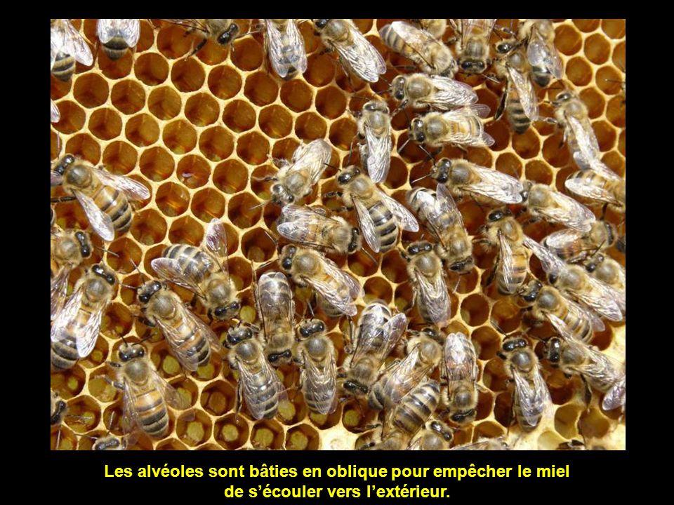 Alvéoles remplies de miel