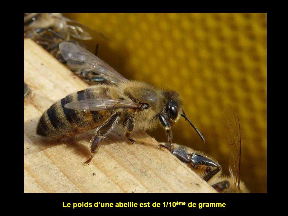 L abeille est une créature unique dans le règne animal.