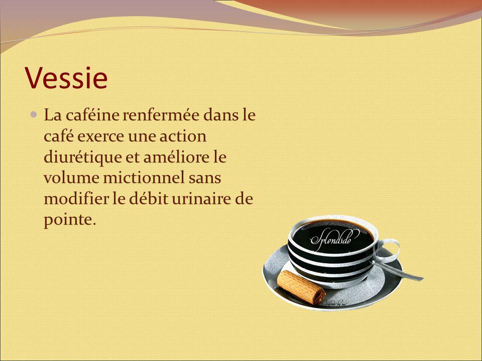 Vésicule biliaire La consommation régulière de café après les repas favorise la digestion des graisses grâce à son action bénéfique sur la vésicule bi