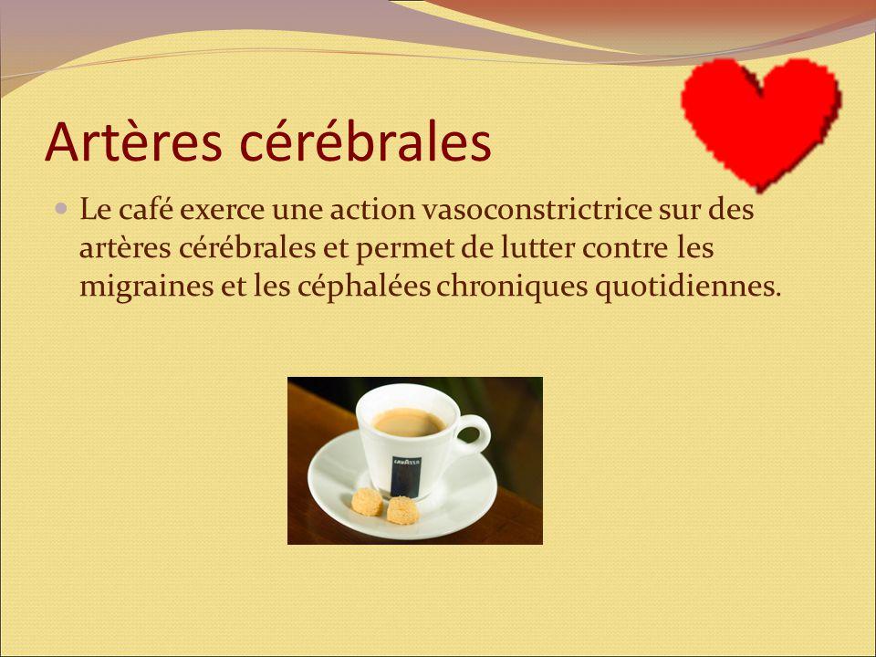 Artères cérébrales Le café exerce une action vasoconstrictrice sur des artères cérébrales et permet de lutter contre les migraines et les céphalées chroniques quotidiennes.