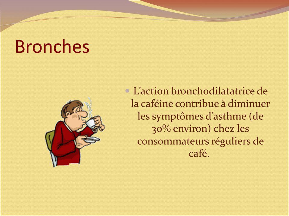 Bronches L'action bronchodilatatrice de la caféine contribue à diminuer les symptômes d'asthme (de 30% environ) chez les consommateurs réguliers de café.