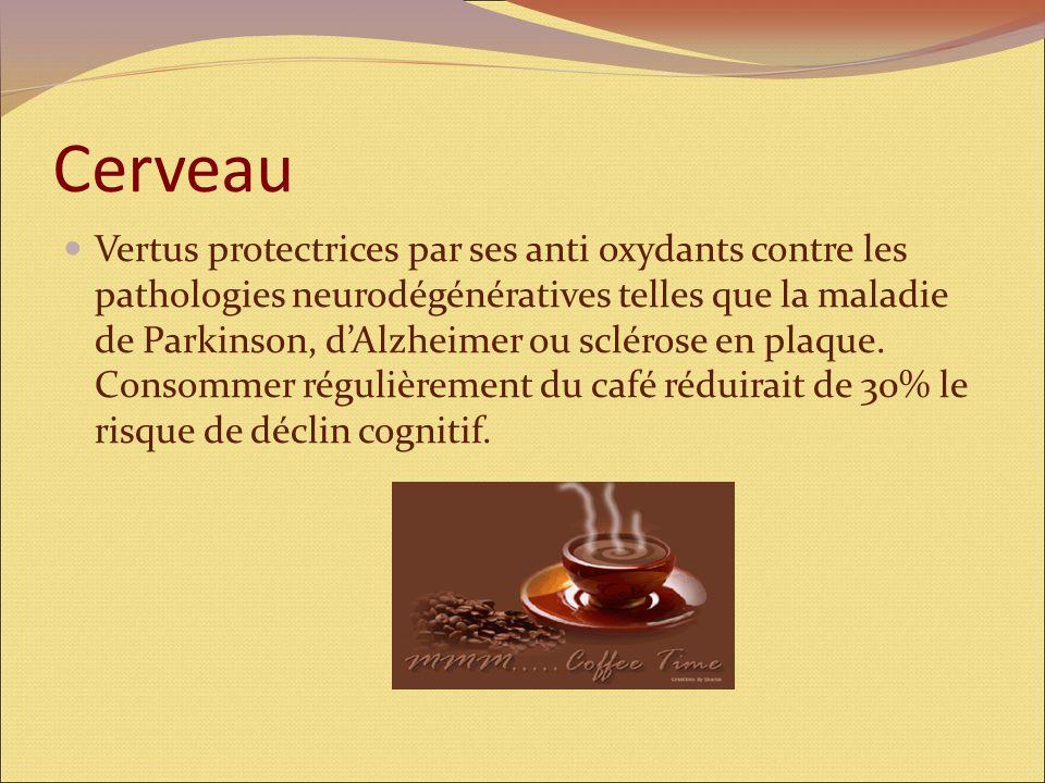 Bronches L'action bronchodilatatrice de la caféine contribue à diminuer les symptômes d'asthme (de 30% environ) chez les consommateurs réguliers de ca