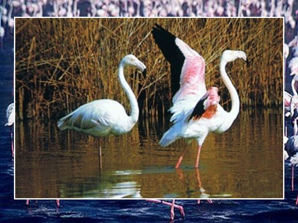 Le Bourget du Lac (73) B.Gispert Si le bonheur doit changer notre vie … laissons - nous aller …