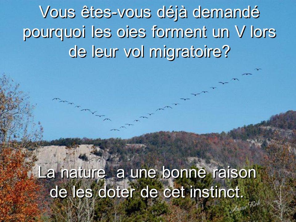 Vous êtes-vous déjà demandé pourquoi les oies forment un V lors de leur vol migratoire.