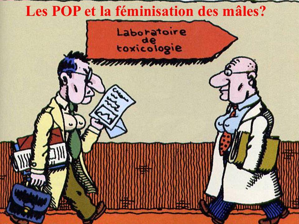 Les POP et la féminisation des mâles?
