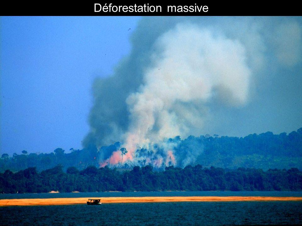 Déforestation massive