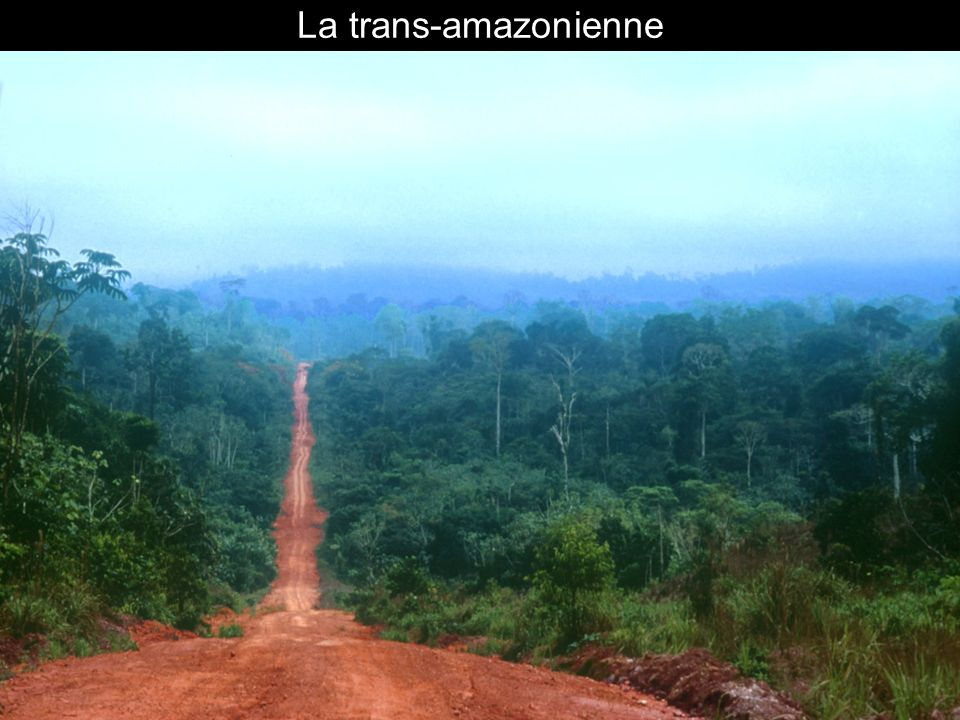 La trans-amazonienne