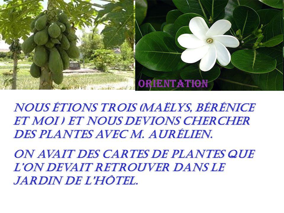 orientation Nous étions trois (Maëlys, Bérénice et moi ) et nous devions chercher des plantes avec M.