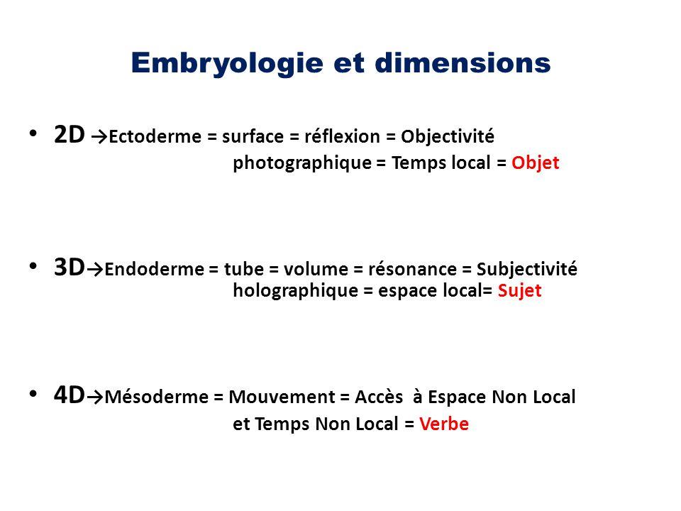 Embryologie et dimensions 2D →Ectoderme = surface = réflexion = Objectivité photographique = Temps local = Objet 3D →Endoderme = tube = volume = réson