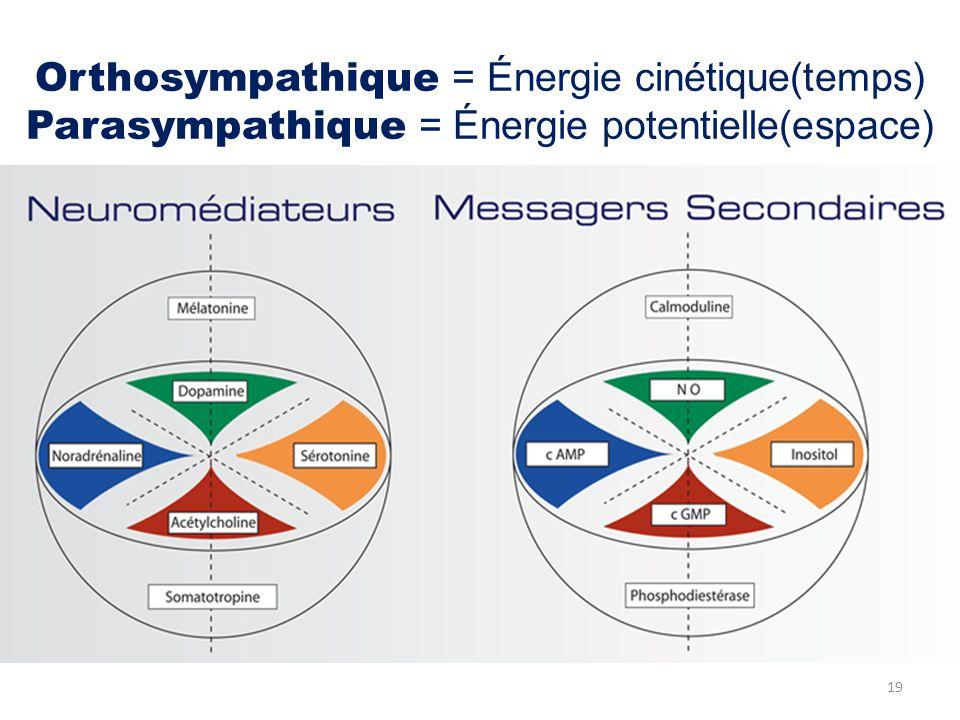Orthosympathique = Énergie cinétique(temps) Parasympathique = Énergie potentielle(espace) 19