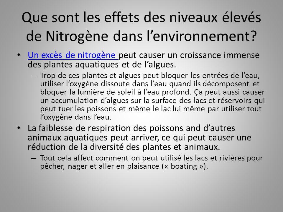 Que sont les effets des niveaux élevés de Nitrogène dans l'environnement? Un excès de nitrogène peut causer un croissance immense des plantes aquatiqu