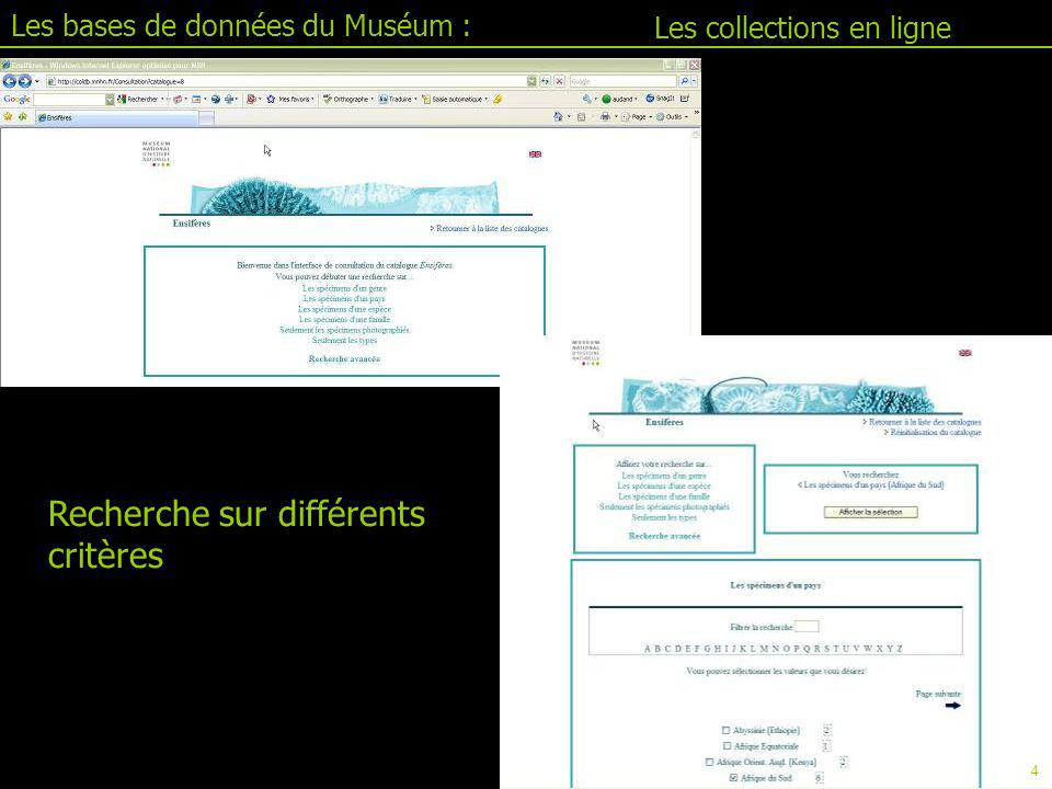 Les bases de données du Muséum : Jacim II.1 : le tableur En tête des colonnes: NOM BASE.NOM TABLE.NOM CHAMP Données exportées sous fichier excel 81