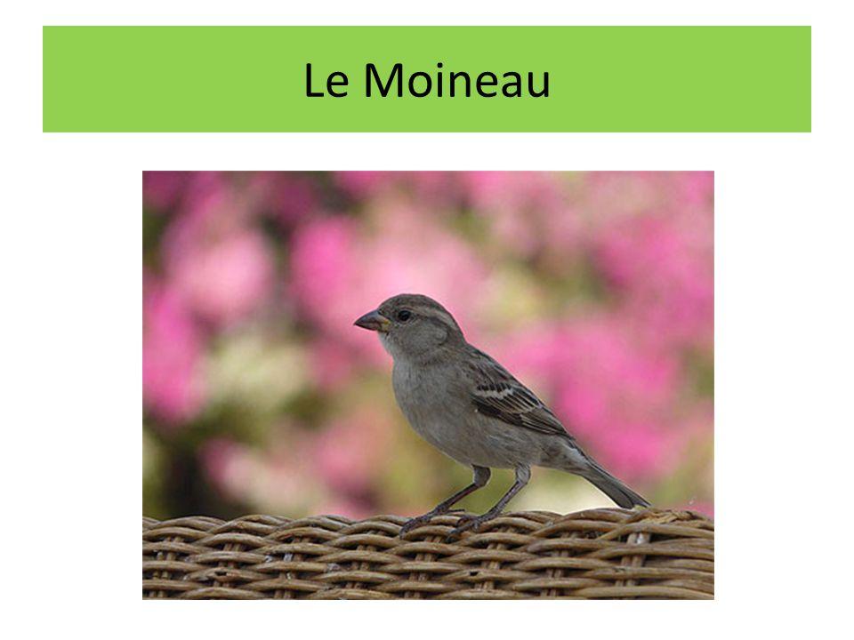Le Moineau