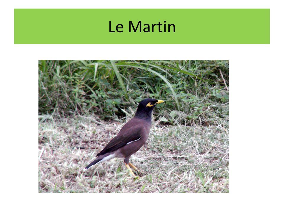 Le Martin