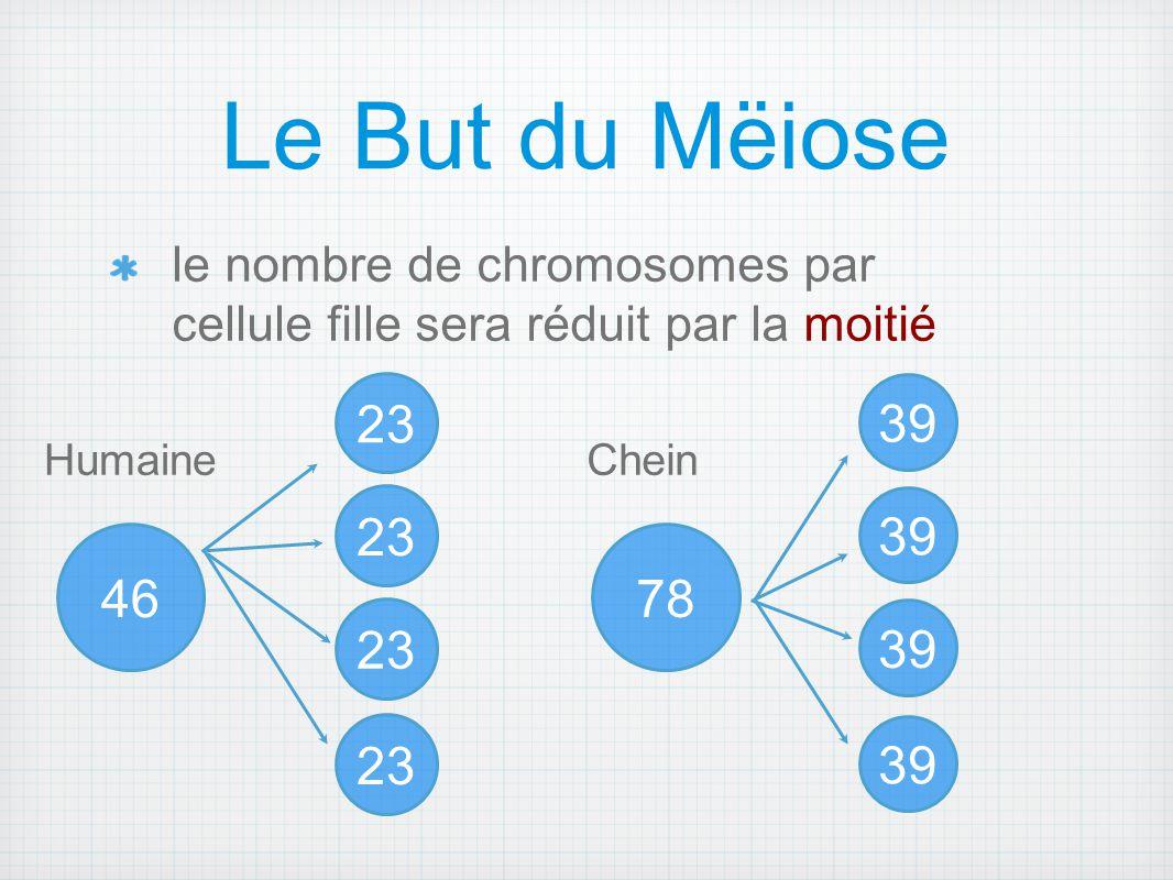 Le But du Mëiose le nombre de chromosomes par cellule fille sera réduit par la moitié 46 23 39 78 23 39 HumaineChein