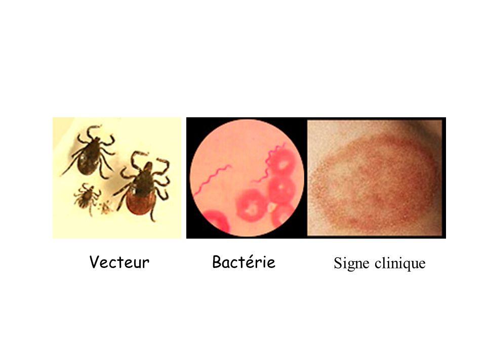 VecteurBactérie Signe clinique