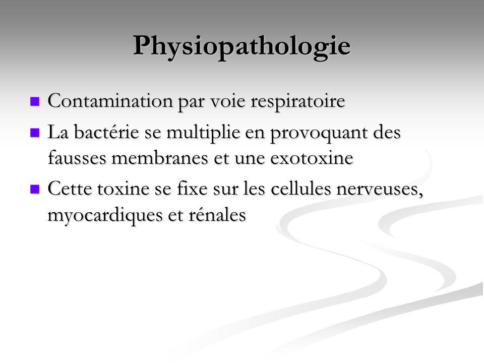 Physiopathologie Contamination par voie respiratoire Contamination par voie respiratoire La bactérie se multiplie en provoquant des fausses membranes