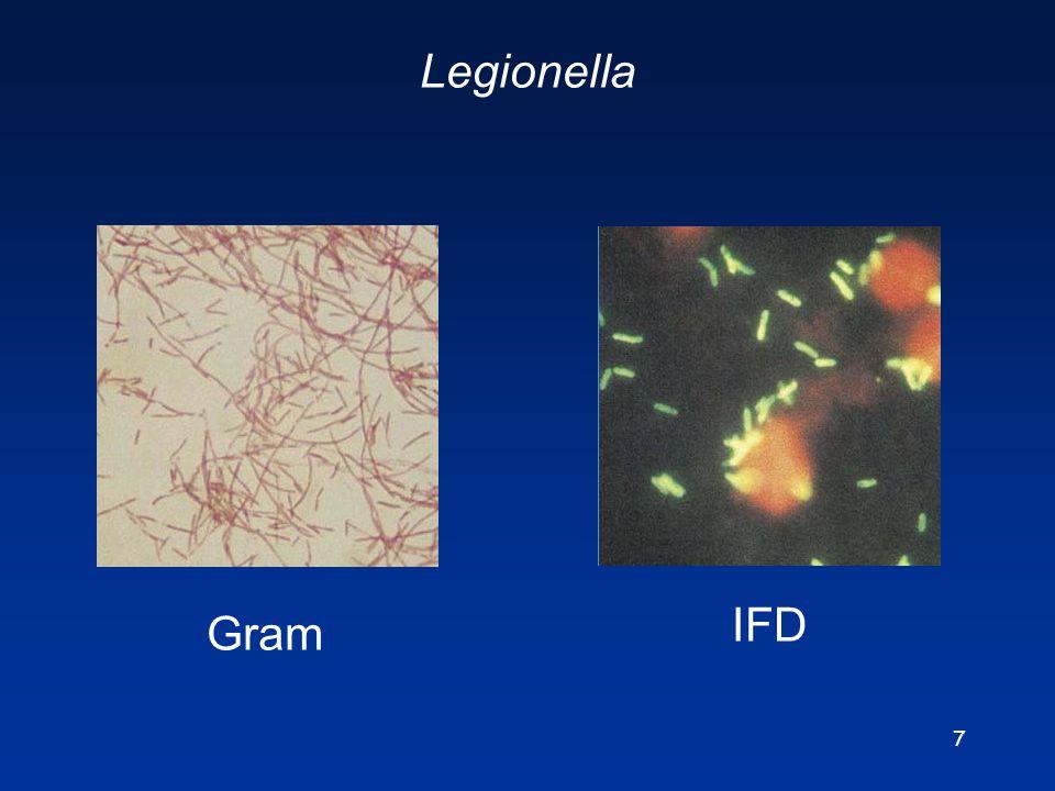 7 Legionella Gram IFD