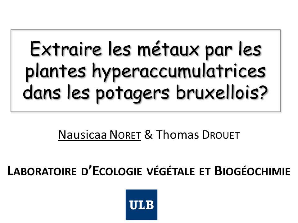 Extraire les métaux par les plantes hyperaccumulatrices dans les potagers bruxellois? Nausicaa N ORET & Thomas D ROUET L ABORATOIRE D 'E COLOGIE VÉGÉT