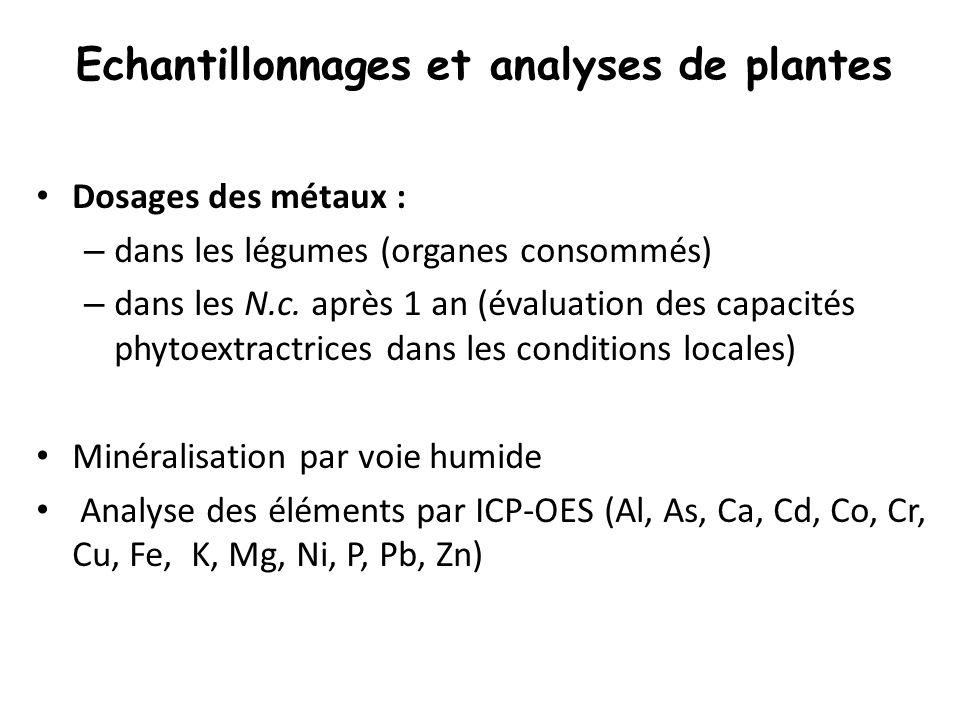 Echantillonnages et analyses de plantes Dosages des métaux : – dans les légumes (organes consommés) – dans les N.c. après 1 an (évaluation des capacit