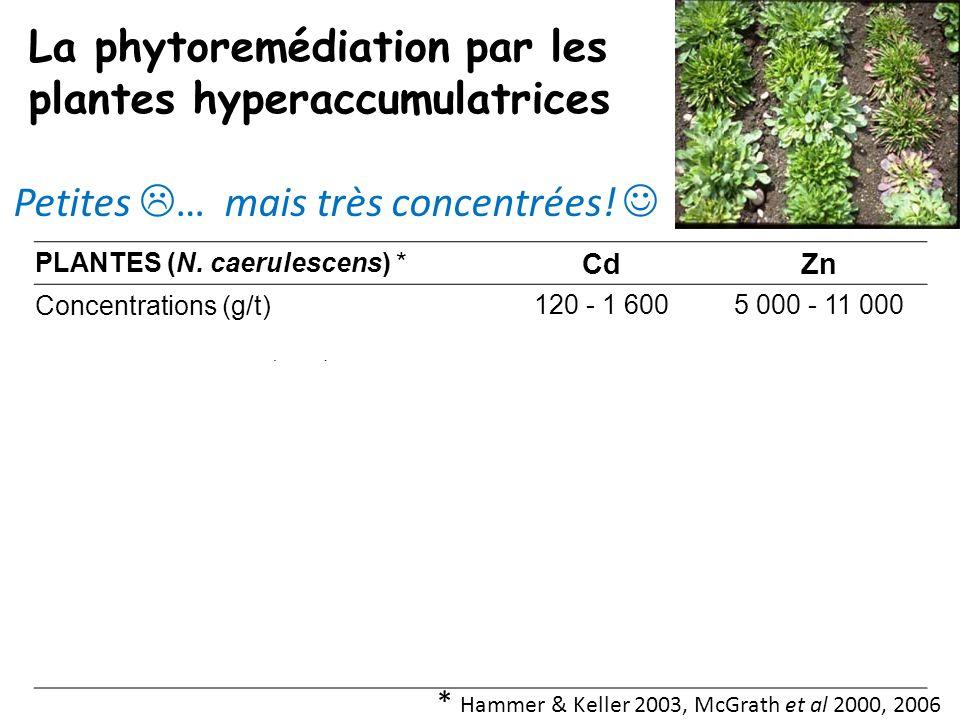 PLANTES (N. caerulescens) * CdZn Concentrations (g/t)120 - 1 6005 000 - 11 000 Biomasse annuelle (t/ha)1 à 4 Masse de métal extraite par an (kg/ha)0,1
