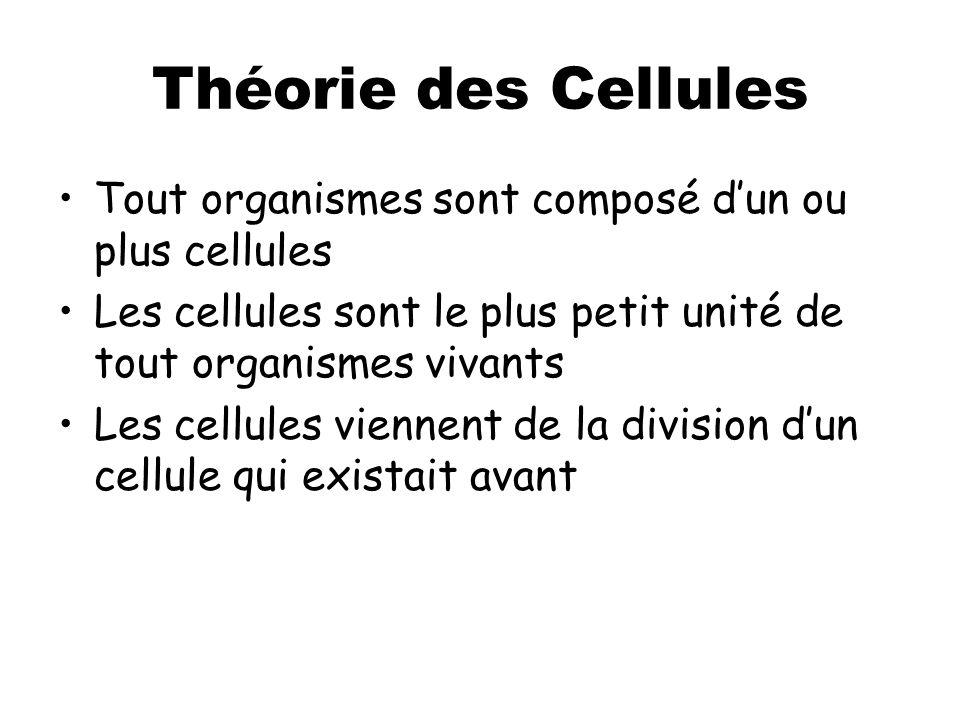 Théorie des Cellules Tout organismes sont composé d'un ou plus cellules Les cellules sont le plus petit unité de tout organismes vivants Les cellules viennent de la division d'un cellule qui existait avant