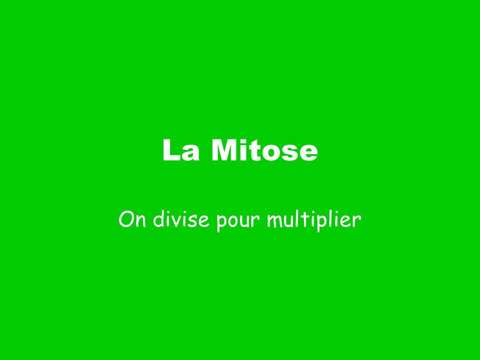 La Mitose Les cellules divisent pour faire plus de cellules.
