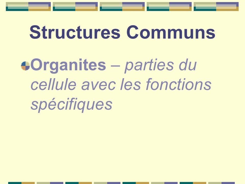 Structures Communs Organites – parties du cellule avec les fonctions spécifiques