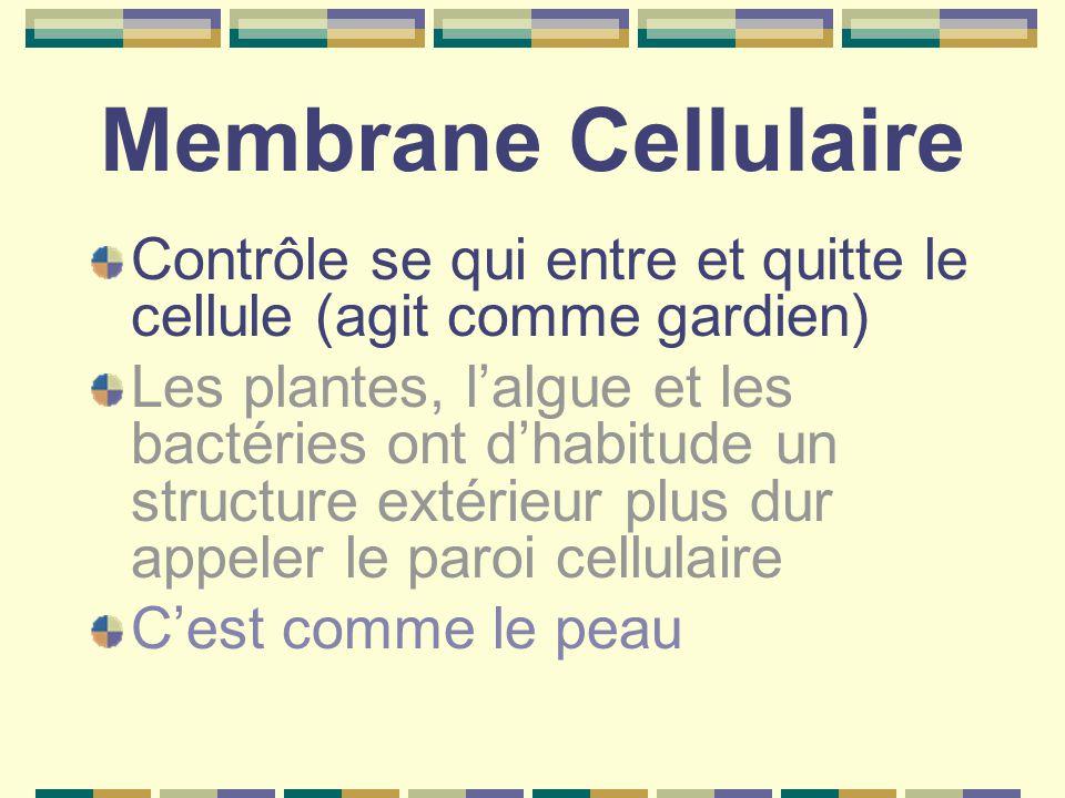 Membrane Cellulaire Contrôle se qui entre et quitte le cellule (agit comme gardien) Les plantes, l'algue et les bactéries ont d'habitude un structure extérieur plus dur appeler le paroi cellulaire C'est comme le peau