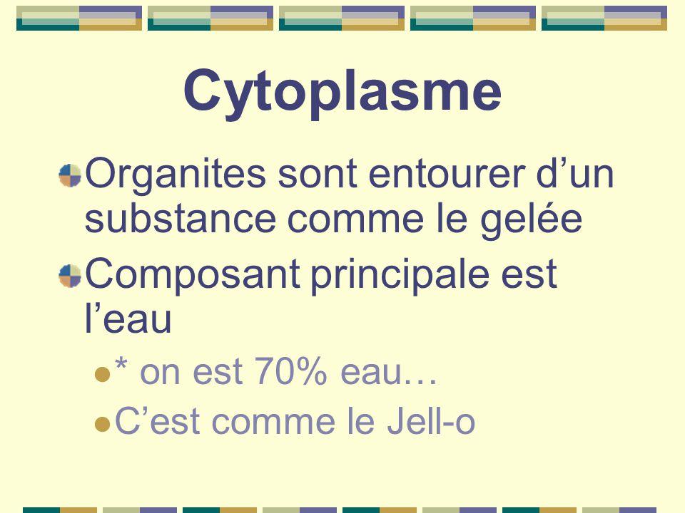 Cytoplasme Organites sont entourer d'un substance comme le gelée Composant principale est l'eau * on est 70% eau… C'est comme le Jell-o