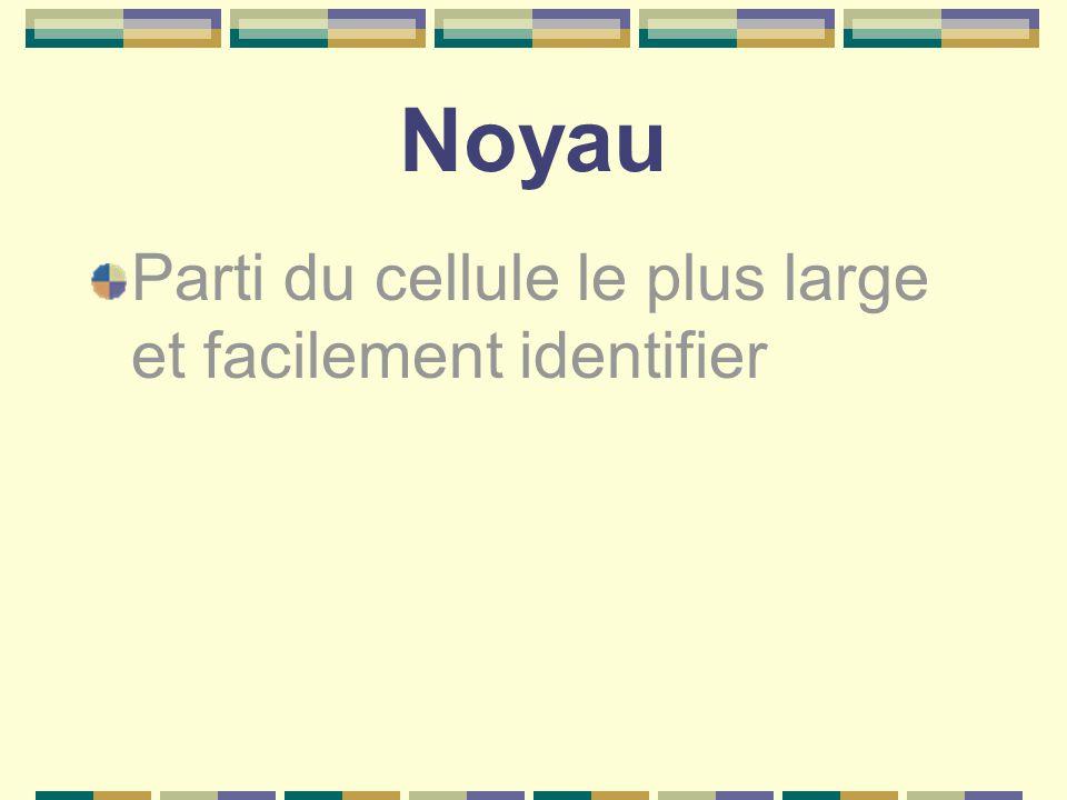 Noyau Parti du cellule le plus large et facilement identifier