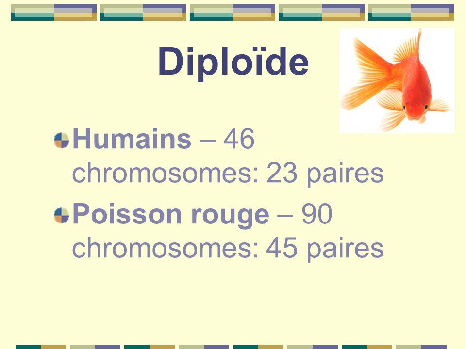 Diploïde Humains – 46 chromosomes: 23 paires Poisson rouge – 90 chromosomes: 45 paires