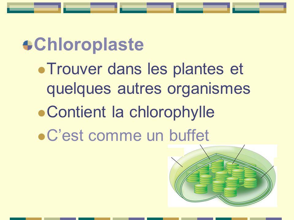 Chloroplaste Trouver dans les plantes et quelques autres organismes Contient la chlorophylle C'est comme un buffet