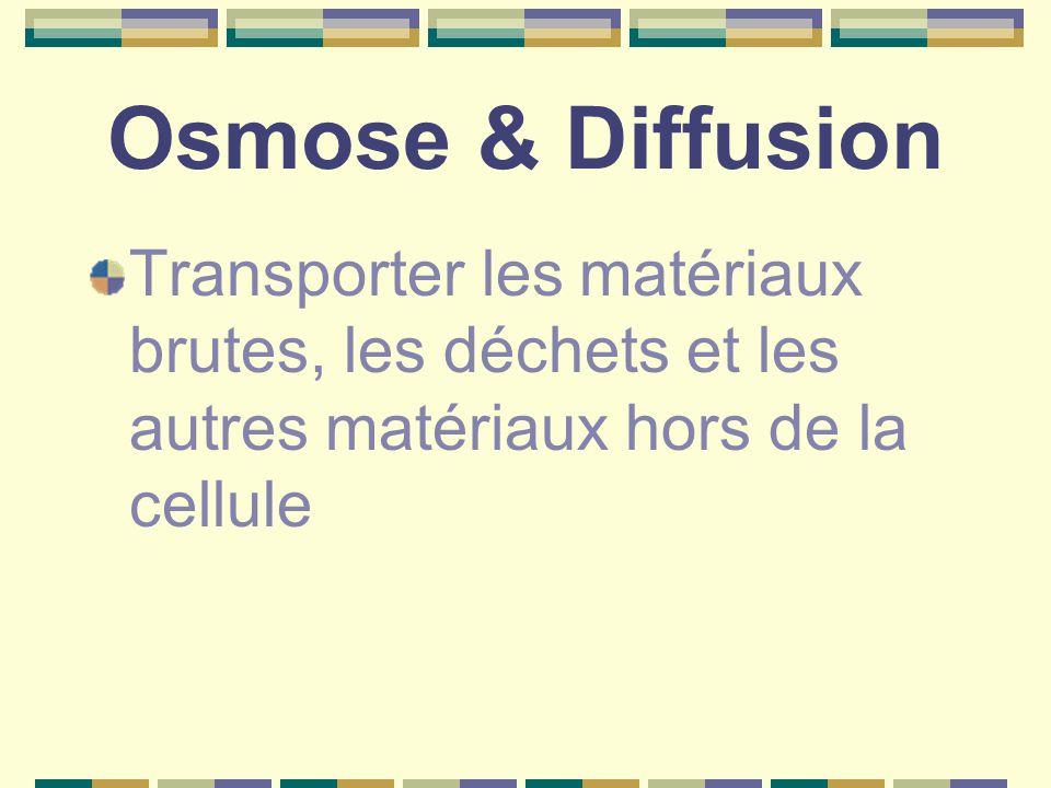 Osmose & Diffusion Transporter les matériaux brutes, les déchets et les autres matériaux hors de la cellule