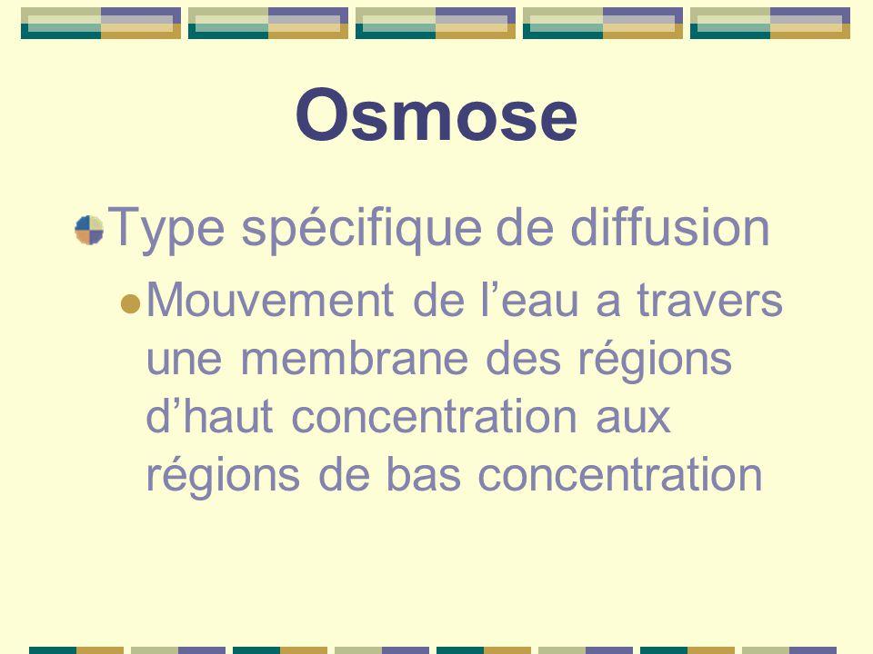 Osmose Type spécifique de diffusion Mouvement de l'eau a travers une membrane des régions d'haut concentration aux régions de bas concentration